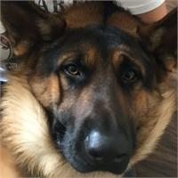 Todd's profile image