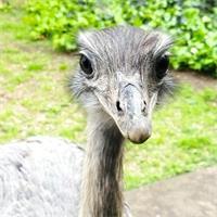 Nicolás's profile image