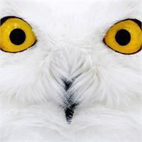 Timothy Yanosko's profile image